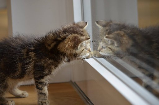 Cat, Mirror, Kitten, Animals