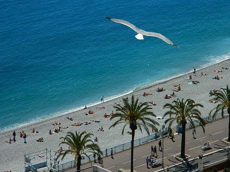 Fly, Azure, Palms