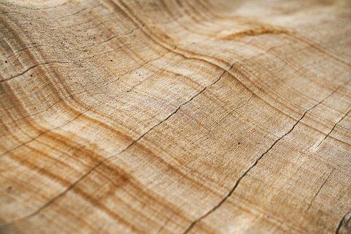Tree, Texture, Shell, Macro, Detail, Brown, Timber