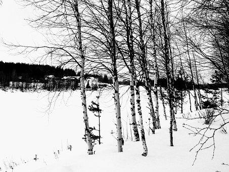 Finland, Birch, Snow, Winter Landscape, Trees, Winter