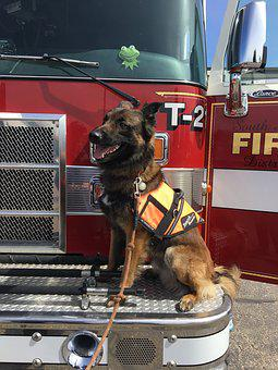 Firefighters, Firetruck, Dog
