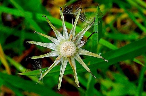 Flower, Spring, Nature, Garden, Plant, Floral, Petal