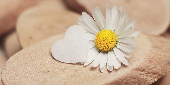 Daisy, Heart, Herzchen, Blossom, Bloom, Daisy Flower