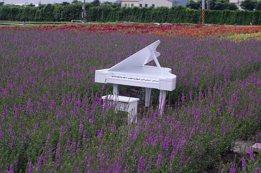 Lavender Fields With White Piano