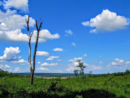 Landscape, Wood, Dried Up, Sky, Blue, Meadow, Sunlight