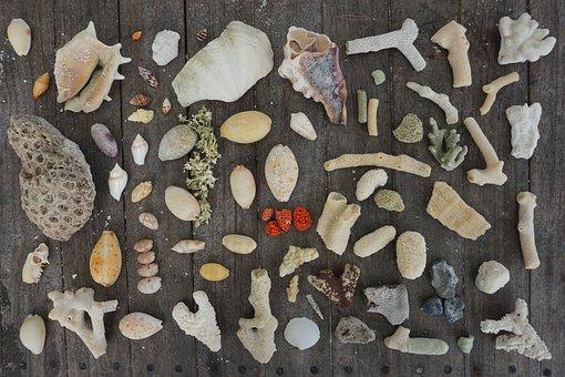 Shell, Coral, Sea, Art, Marine, Vacation, Holiday