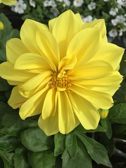 Flower, Yellow, Yellow Flowers, Floral, Summer, Plant