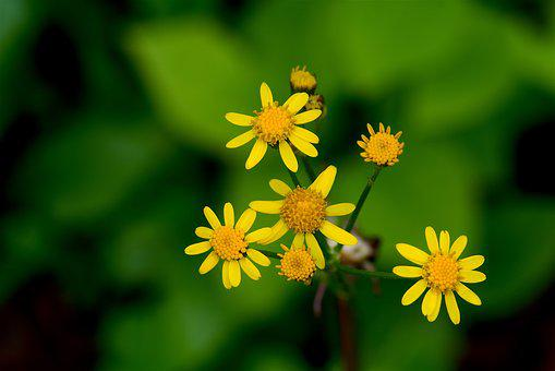 Yellow, Flower, Nature, Beautiful, Spring, Plant