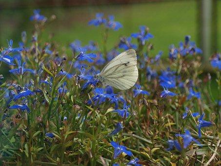 Butterfly In Flowers, Butterfly, White Butterfly