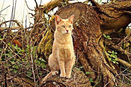 Cat, Kitten, Mieze, Rassekatze, Tree Stump, Forest