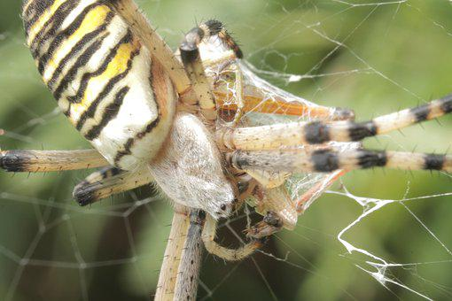 Animals, Spider, Nature, Animal, Insects, Insect