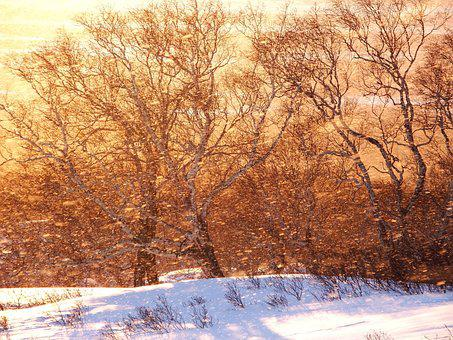 Forest, Sunset, Snow, Blizzard, Nature, Landscape