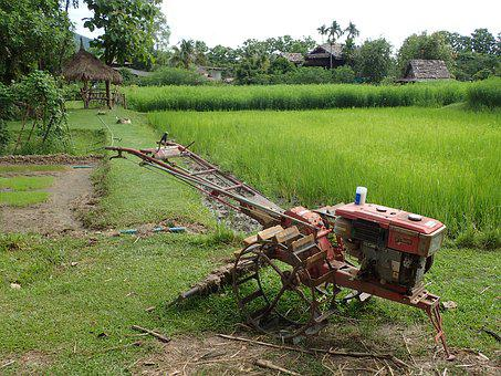 Rice Field, Agriculture, Asia, Thailand, Field