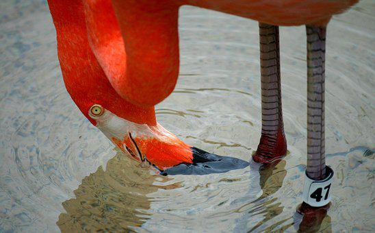 Flamingo, Bird, Fowl, Nature, Tropical, Exotic, Pink