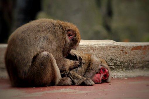 Monkey, Zoo, Wanted, Nature, Animal, Animal World
