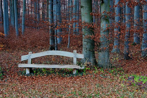 Forest, Bank, Rest, Autumn, Bank Seat, Silent, Leaves