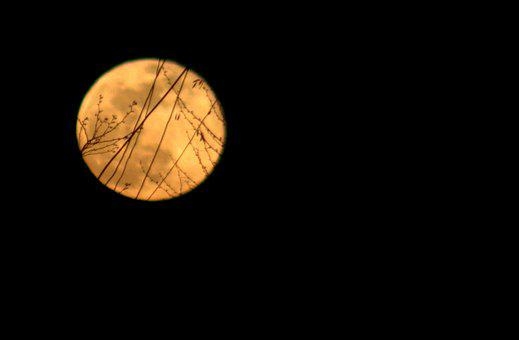 Full Moon, Yellow, Branches, Shadows, Night