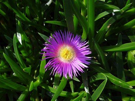 Flower, Silvestre, Nature, Detail, Plant, Flowers