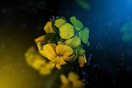Flowers, Visual Composer, Colors