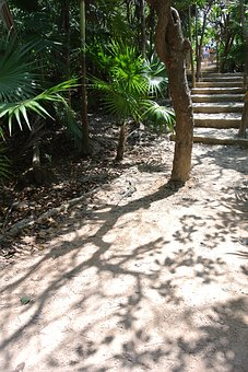 Sand, Tree, Palm Tree, Walkway, Stairs, Tropical