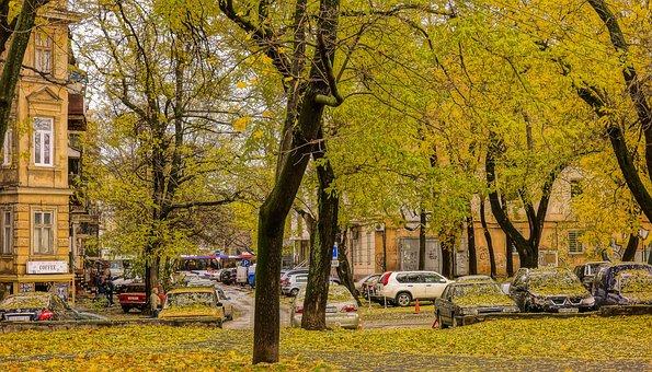 Autumn, Yellow Leaves, Autumn Colors