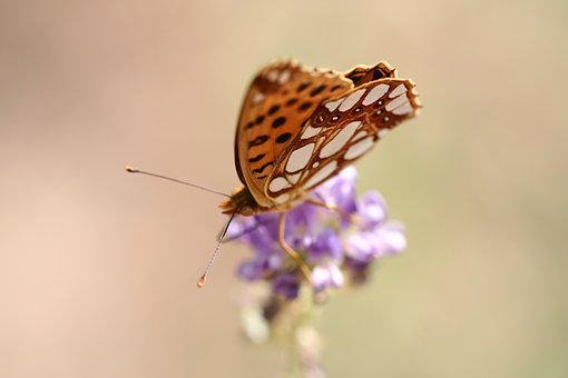 Butterfly, Animal, Fly, Wing, Close, Macro, Moth