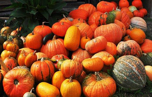 Autumn, Harvest, Pumpkin, Vegetables