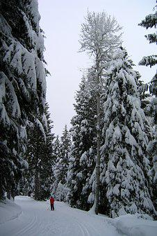 Winter, Snow, Skier, Cold, Skiing, Active, Outdoor