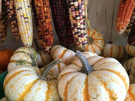 Squash, Corn, Food, Harvest, Vegetable, Farming