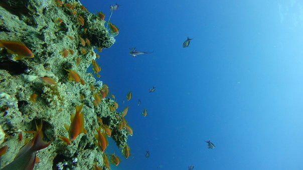 Diving, Fish, Southern Countries, The Red Sea
