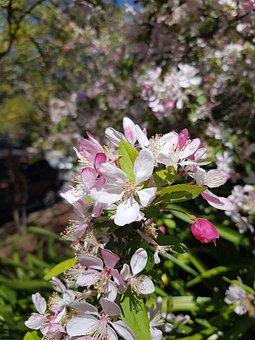 White, Flower, Pink, Floral, Blossom, Focus