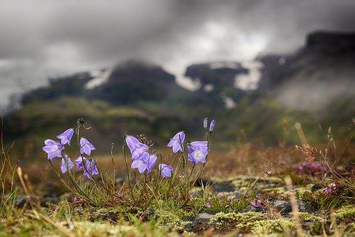 Bellflower, Light, Glacier, Mood, Iceland, Macro