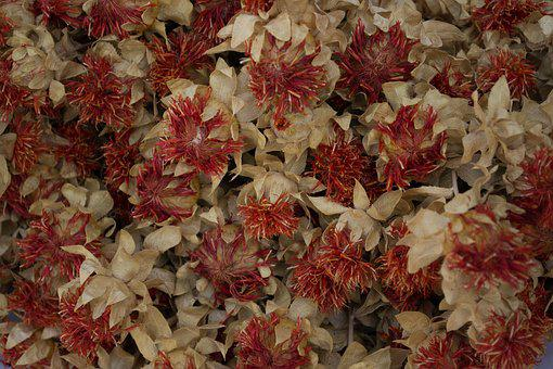 Flowers, Red, White, Decorative, Macro, Foliage, Petal