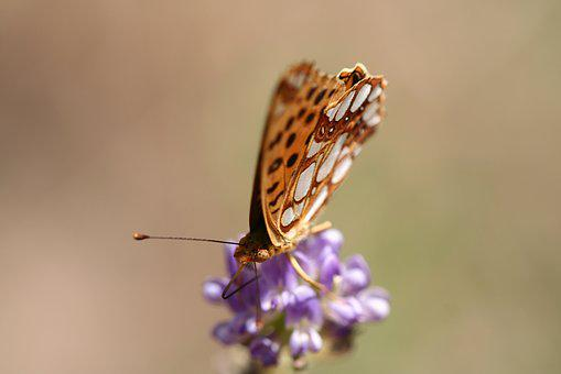 Butterfly, Animal, Fly, Close, Insect, Macro, Moth