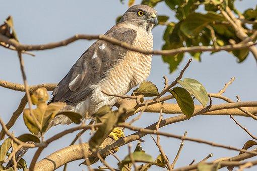 Nature, Bird, Animal, Wildlife, Wild, Branch, Natural