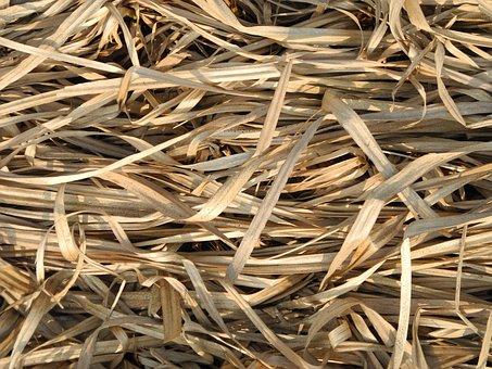 Grass, Dry, Dry Grass, Autumn, Nature