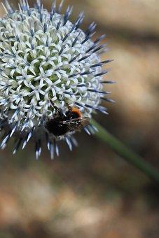 Flower, Animal, Bee, Macro, Nature, Spring, Flying Bee