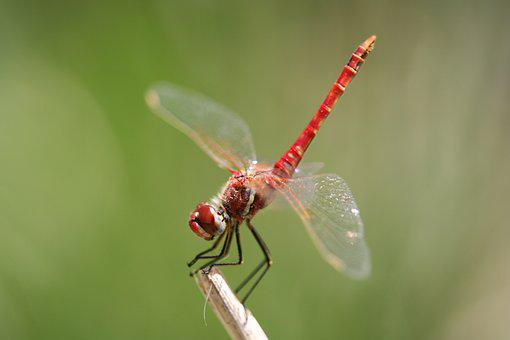 Fly, Dragonfly, Propeller, Wing, Red, Insect, Speed