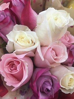 Rose, Roses, Flower, Floral, Love, Nature, Blossom