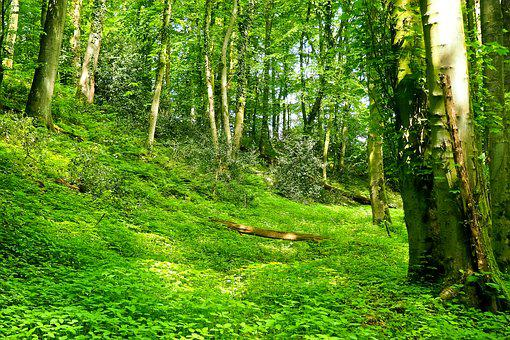 Forest, Landscape, Bach, Glade, Trees, Nature, Green