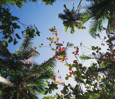 Trees, Tropical, View, Coconuts, Flowers, Relax, Enjoy