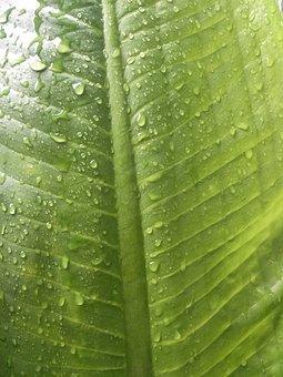 Rain, Drops Of Water, Green, Autumn Leaves