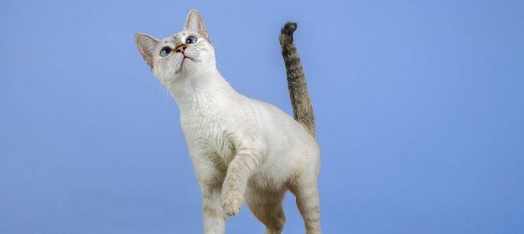 Cat, Kitten, Feline, Animal, Gata, Pet, Feline Look