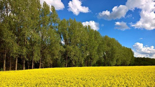 Spring, Westerwald, Field, Nature, Landscape, Sky