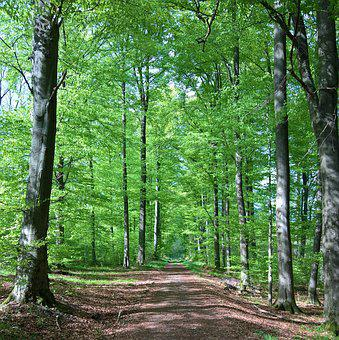 Forest, Away, Trees, Green, Forest Path, Trail, Hiking
