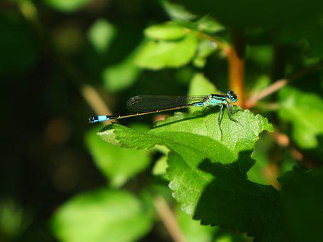 Dragonfly, Nature, Lakeside, Insect, Macro
