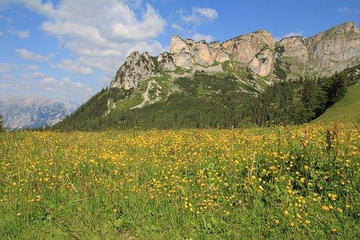 Mountains, Meadow, Buttercup, Yellow, Alpine, Landscape