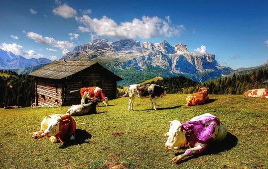 Alm, Alpine, Mountains, South Tyrol, Nature, Hut