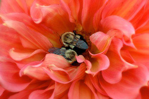 Bees, Insects, Nature, Honey, Yellow, Fly, Pollen
