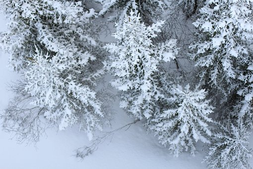 Snow, Firs, Perspective, From Above, Winter, Snowy
